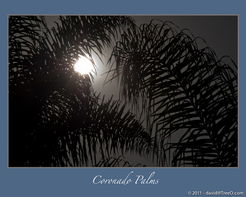 Coronado Palms - Coronado Island, San Diego California - April 21, 2009
