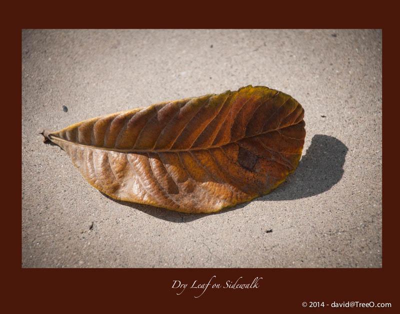 Dry Leaf on Sidewalk