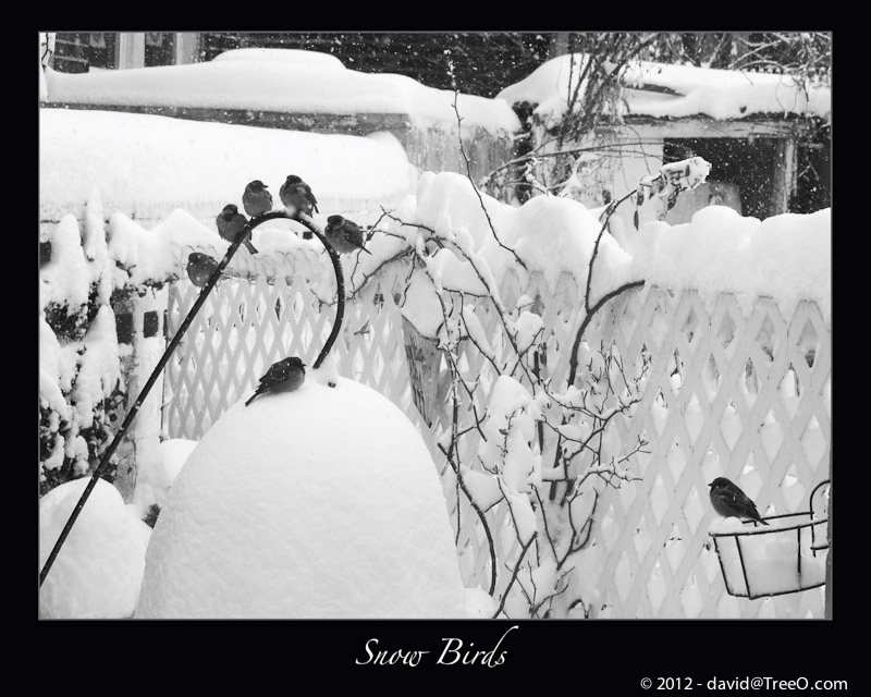 Snow Birds - Our Backyard, Philaelphia, Pennsylvania - February 12, 2006