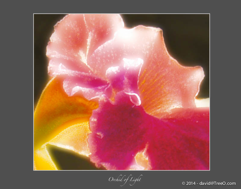 Orchid of Light