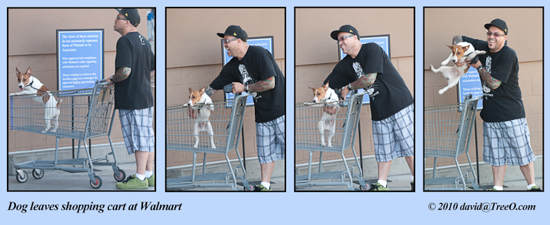 Dog leaves shopping cart at Walmart - San Diego, California - July 14, 2010