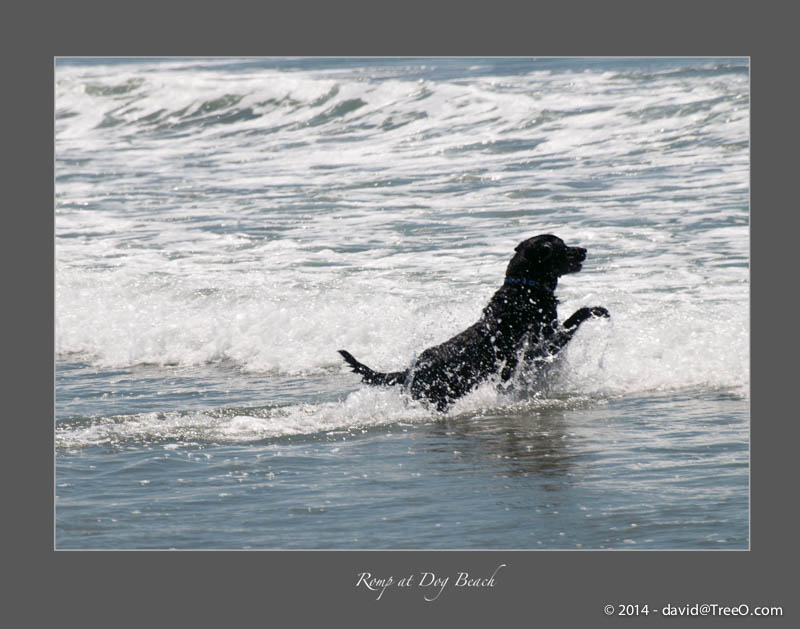 Romp at Dog Beach