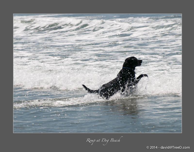 Romp at Dog Beach