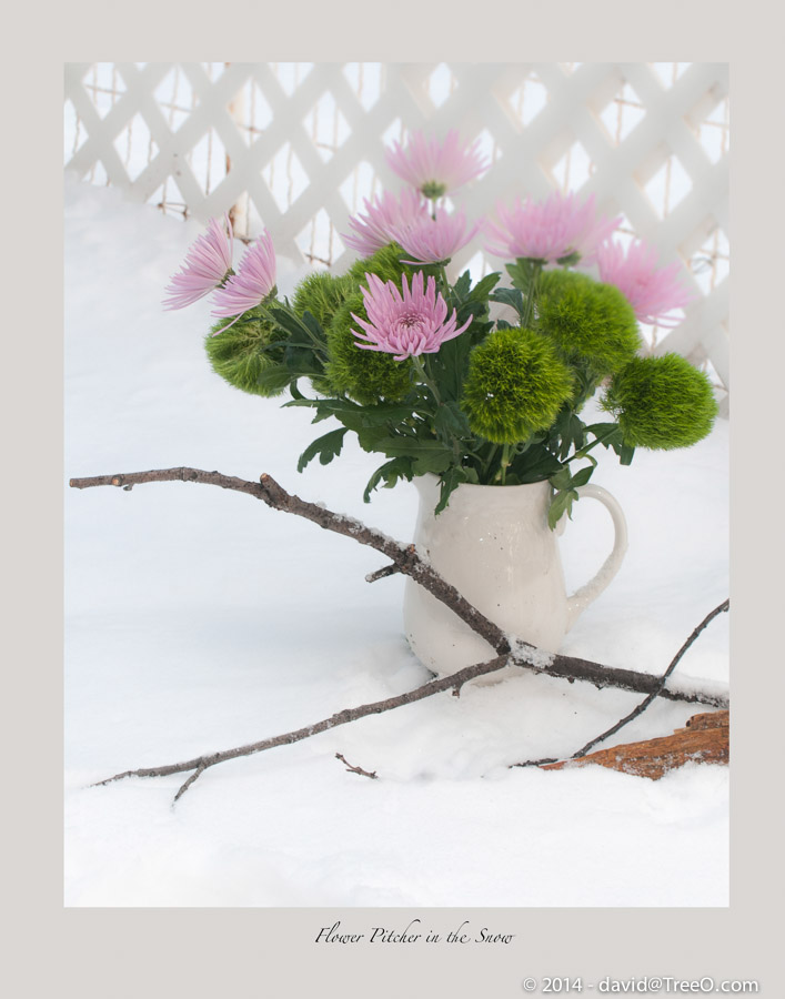 Flower Pitcher in the Snow
