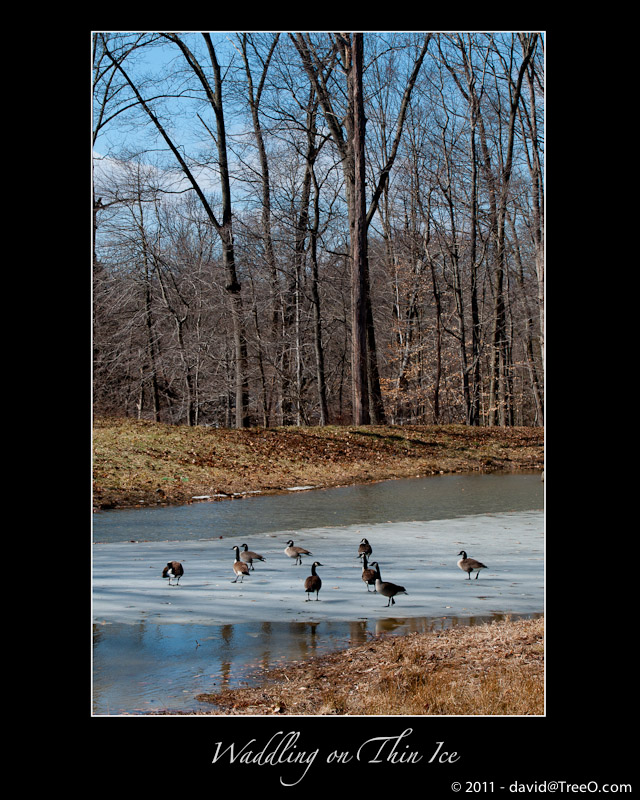 Waddling on Thin Ice - Wilmington, Delaware - February 19, 2011