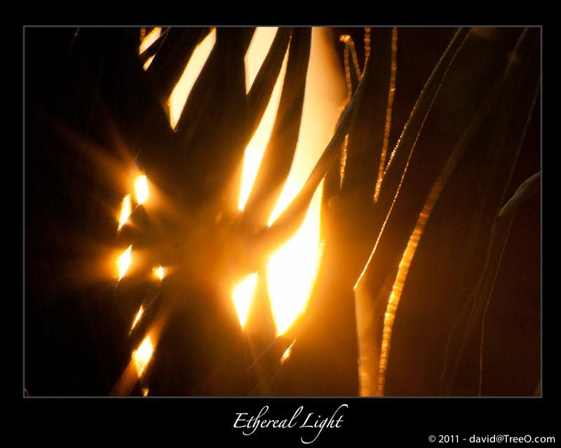 Ethereal Light - Pacific Palisades Park - Santa Monica, California - June 7, 2009