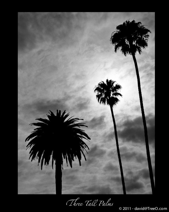 Three Tall Palms - Santa Monica, California - June 10, 2009