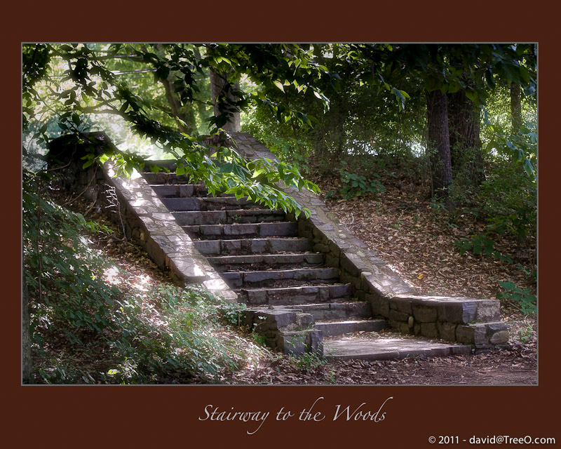 Stairway to the Woods - Washington's Crossing near River Road, Pennsylvania - August 9, 2008, 2008