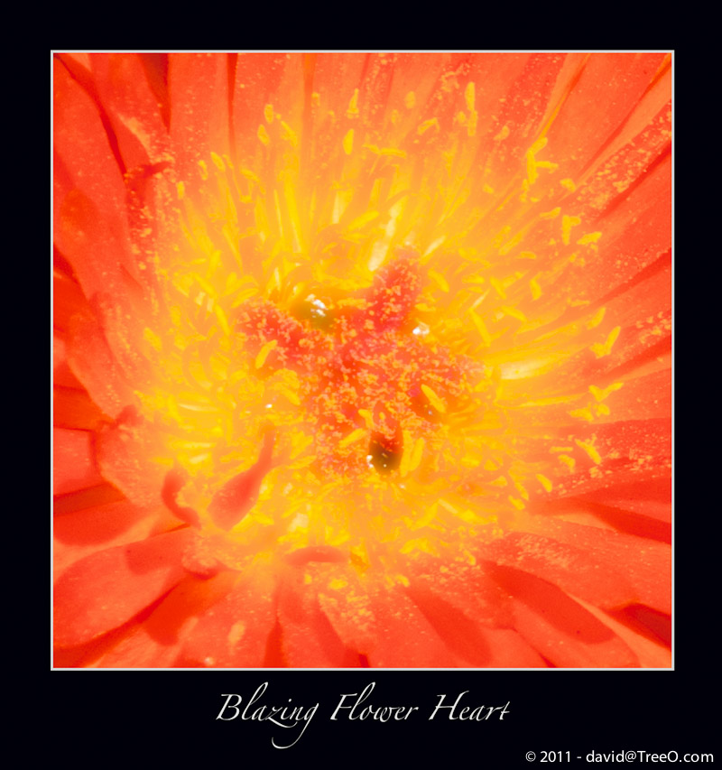 Blazing Flower Heart - Coronado Island, San Diego, California - August 2, 2010