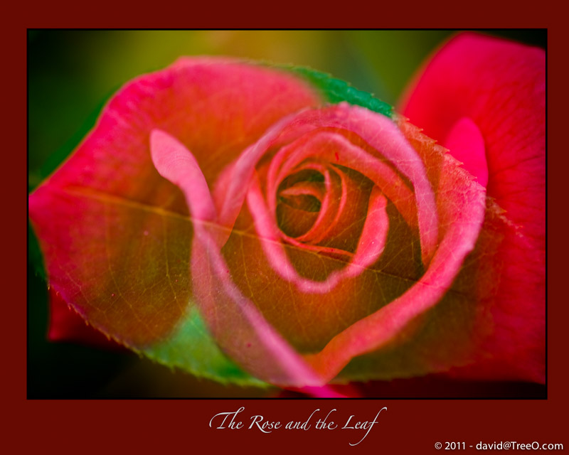 The Rose and the Leaf - Philadelphia, Pennsylvania -September 23, 2008