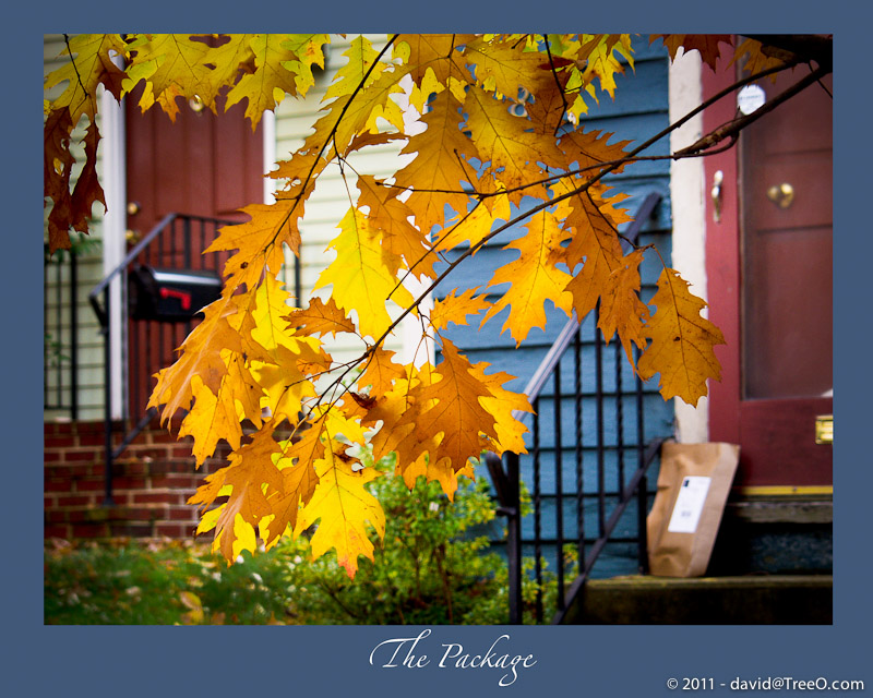 The Package - Fall in Bucks County, Pennsylvania - November 21, 2007