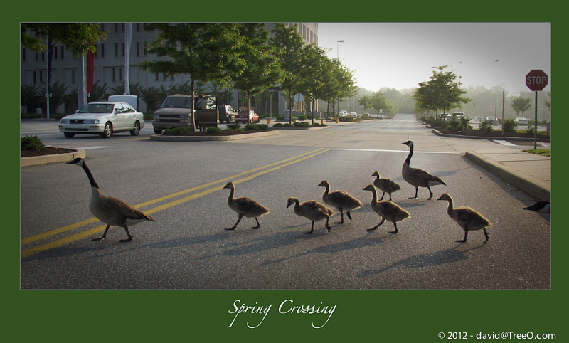 Spring Crossing - Plymouth Meeting Mall, Pennsylvania – May 29, 2003