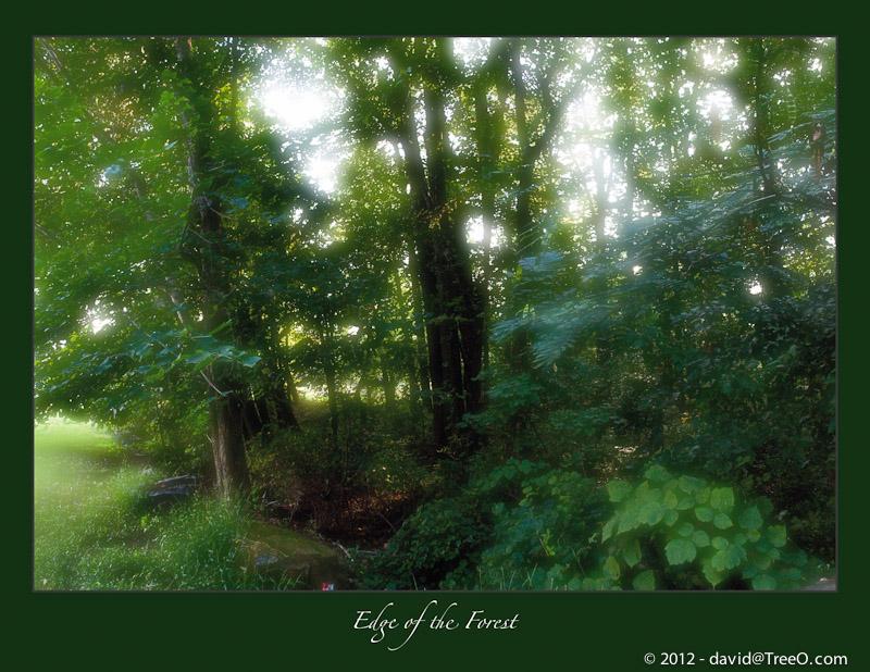 Edge of the Forest - Wilmington, Delaware - September 18, 2009