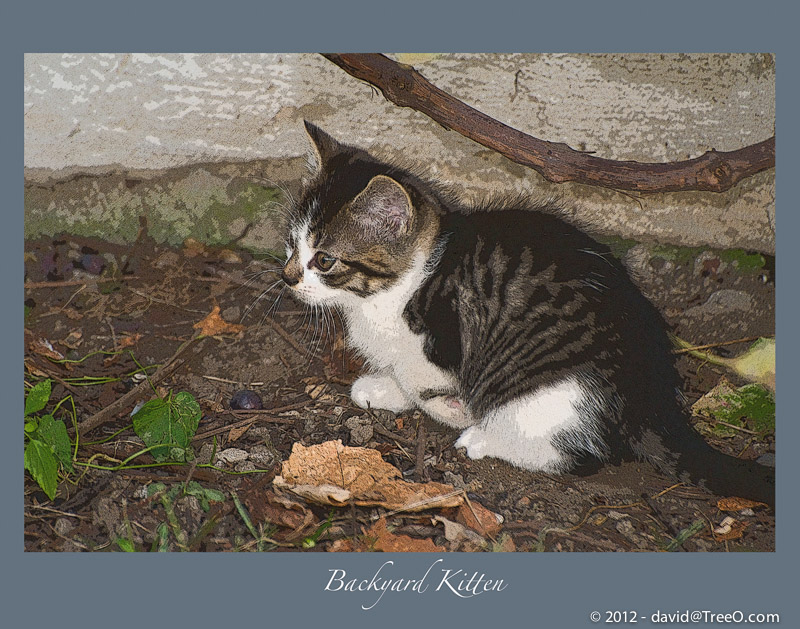 Backyard Kitten - South Philly, Pennsylvania - October 18, 2008