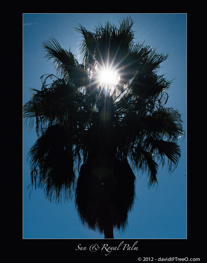Sun & Royal Palm - San Diego, California - November 16, 2012