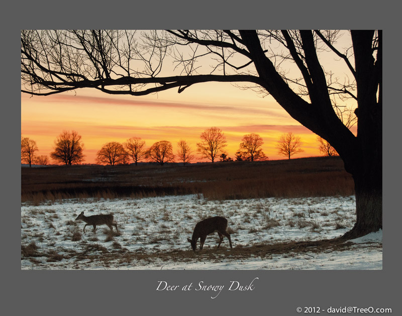 Deer at Snowy Dusk