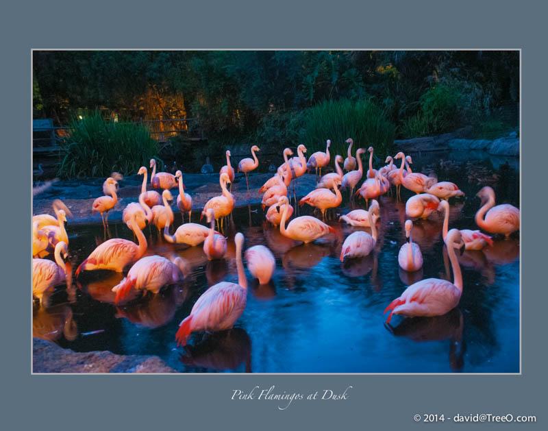 Pink Flamingos at Dusk