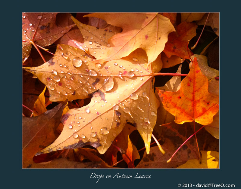 Drops on Autumn Leaves