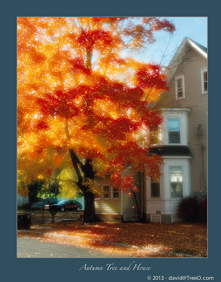 Autumn Tree and House