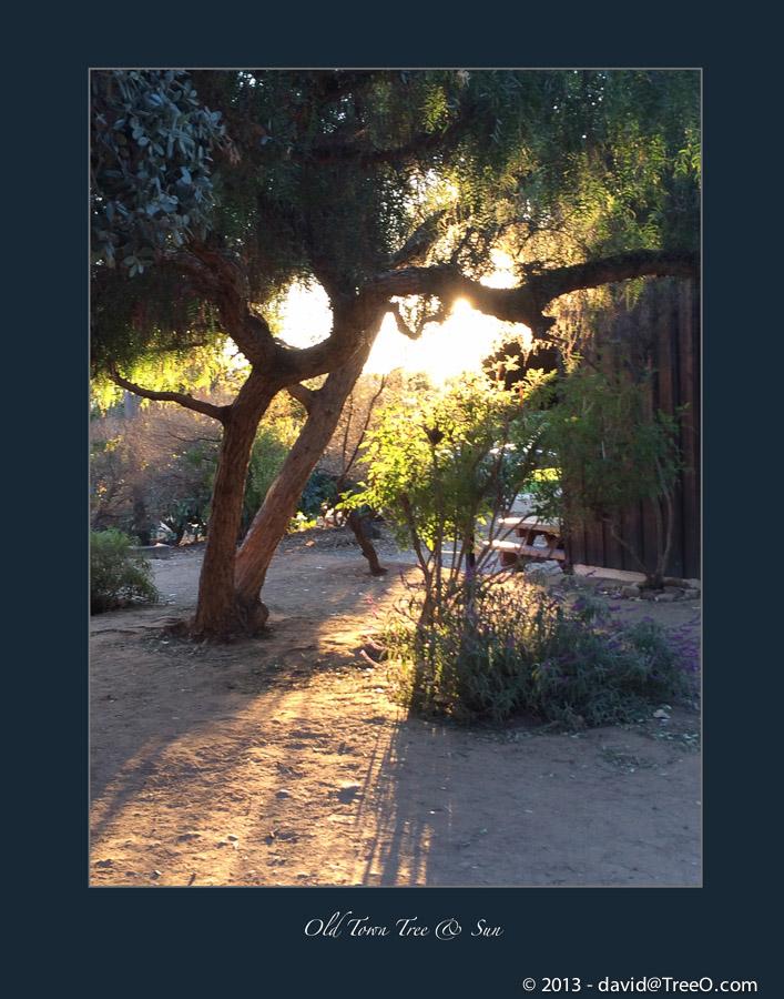 Old Town Tree & Sun