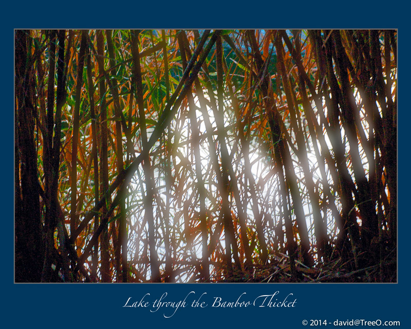 Lake through the Bamboo Thicket