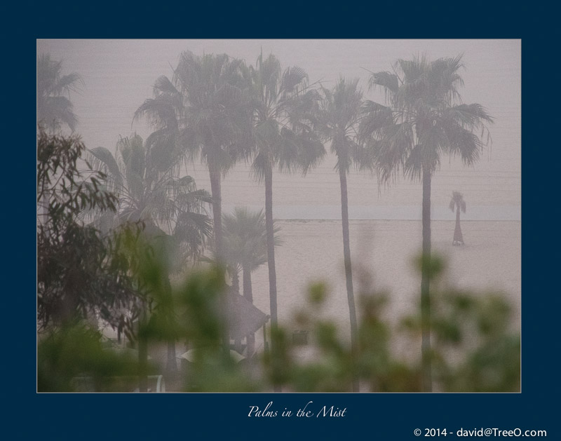 Palms in the Mist