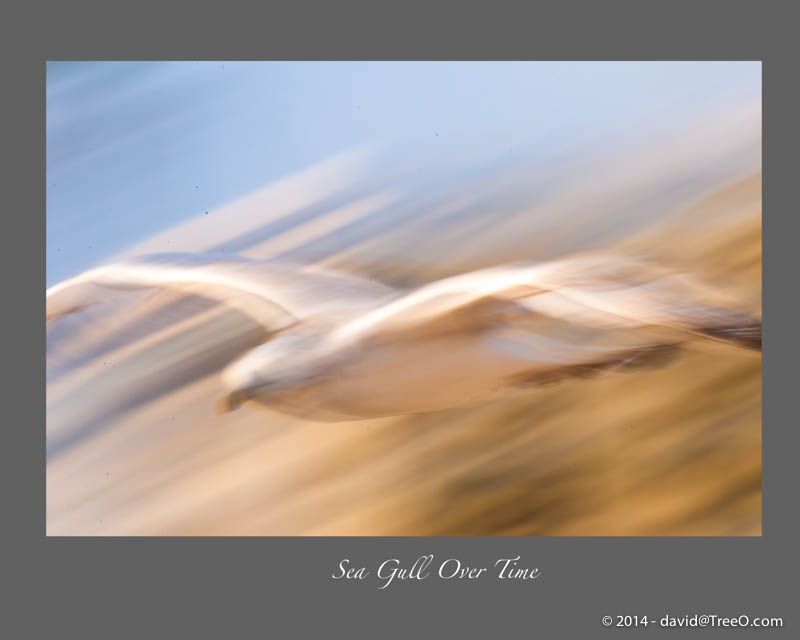 Sea Gull Over Time