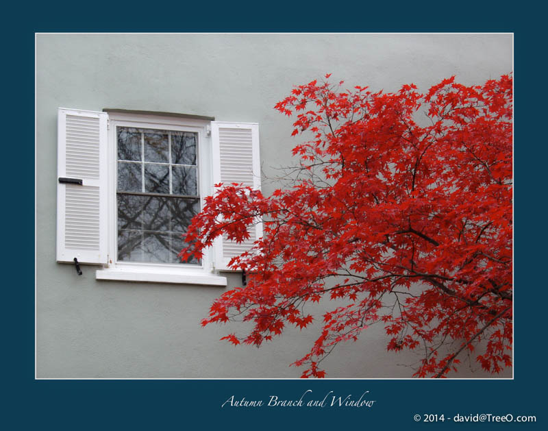 Autumn Branch and Window