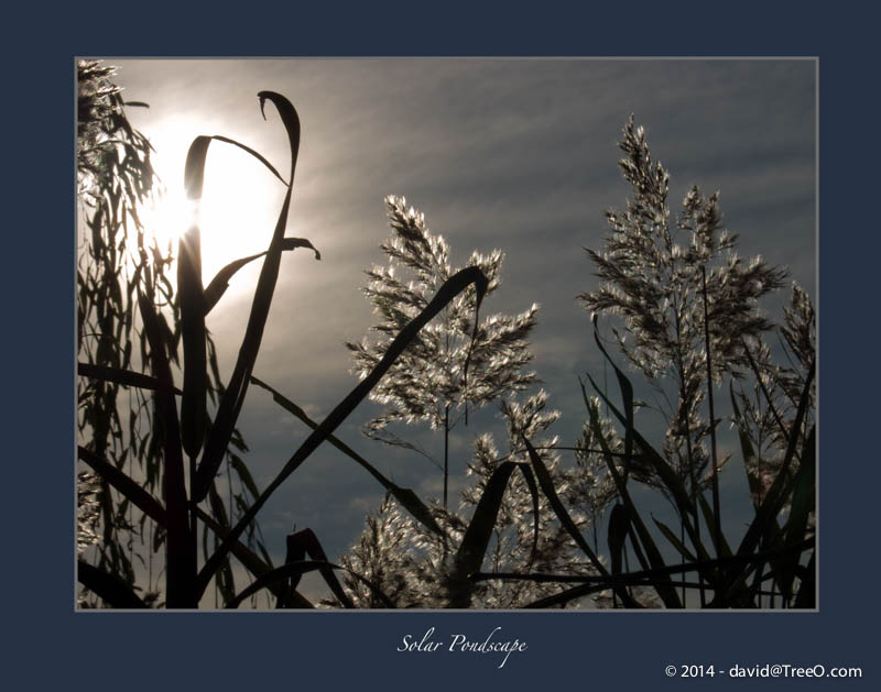 Solar Pondscape