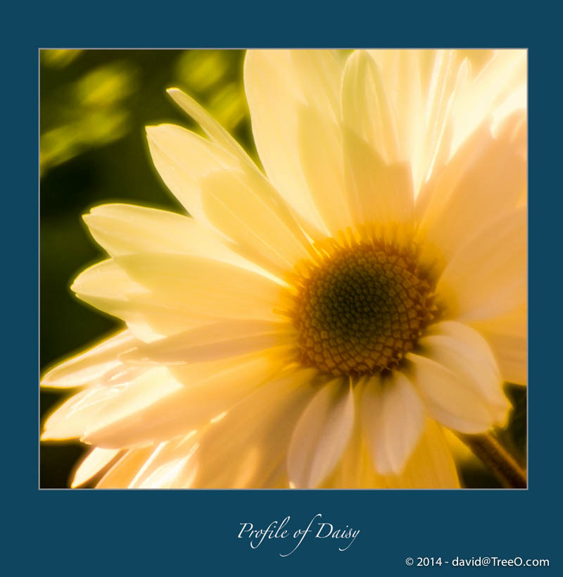 Profile of Daisy