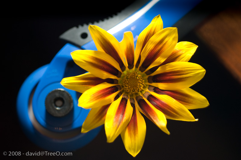 Still Life – Flower and Cutter