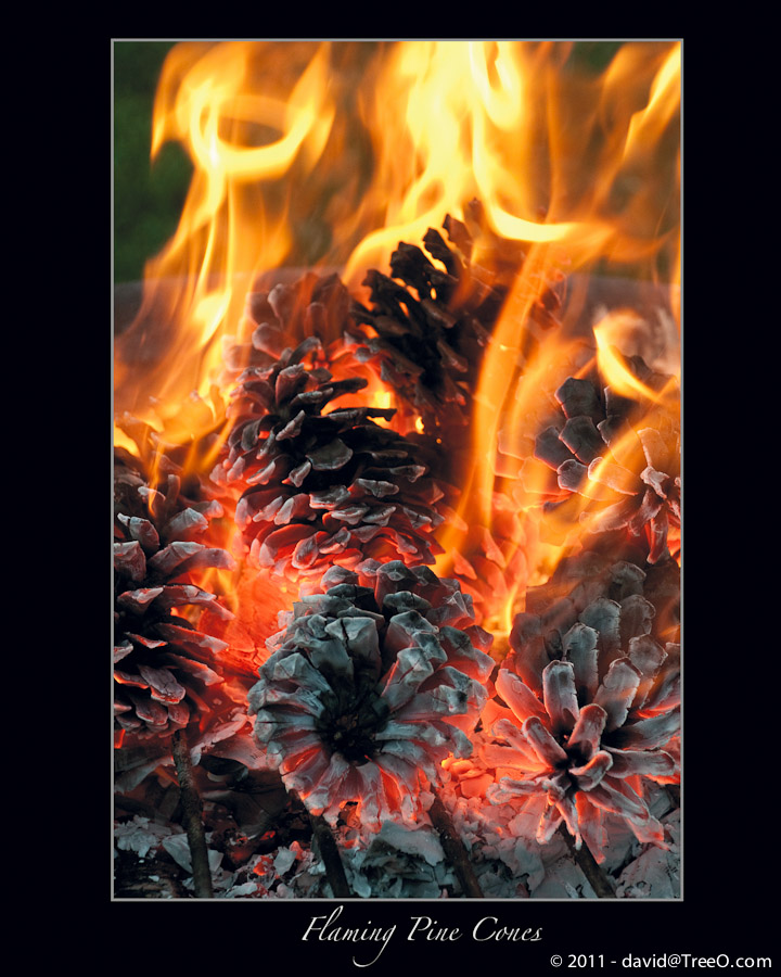 Flaming Pine Cones
