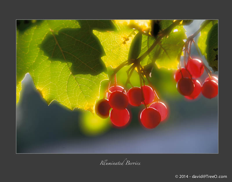 Illuminated Berries