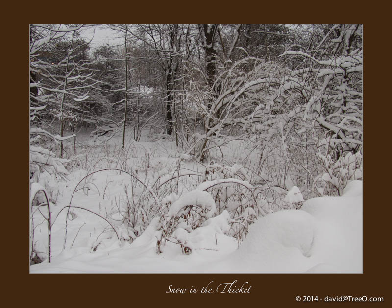 Snow in the Thicket