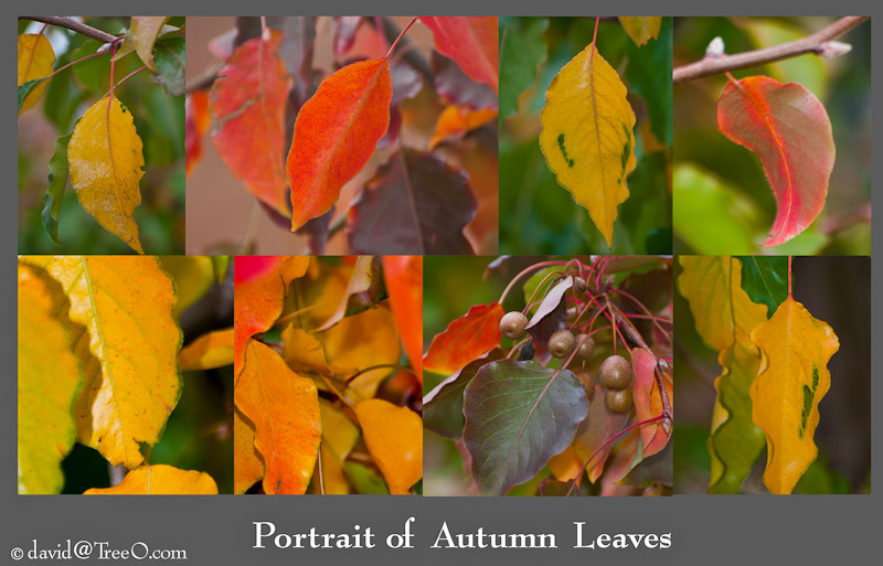Portrait Of Autumn Leaves