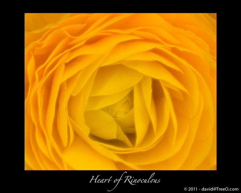 Heart of Rinoculous