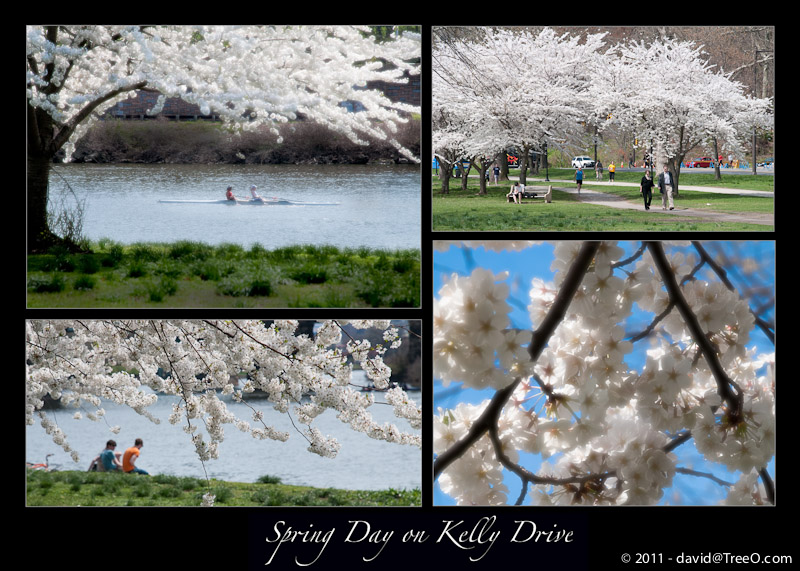 Spring Day on Kelly Drive