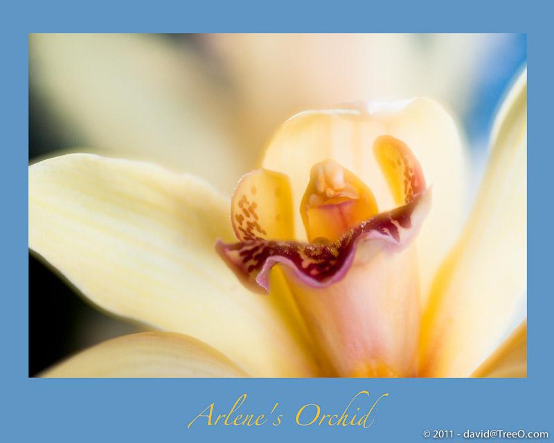 Arlene's Orchid