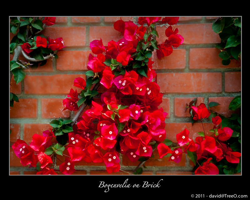 Bogenvelia on Brick