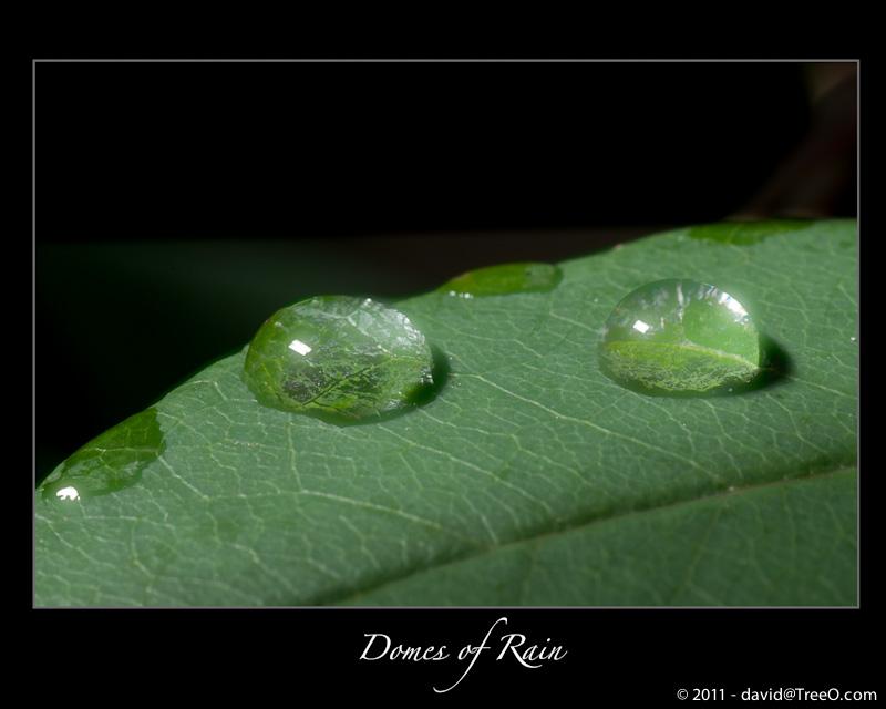 Domes of Rain