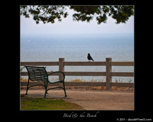 The Bird & the Bench - Santa Monica, California - May 30, 2009 - Overlooking the Pacific Ocean from the bluff at Palisades Park.