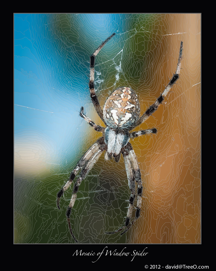 Mosaic of Window Spider