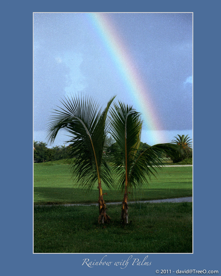 Rainbow with Palms