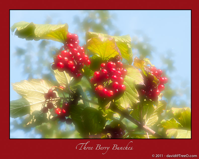Three Berry Bunches