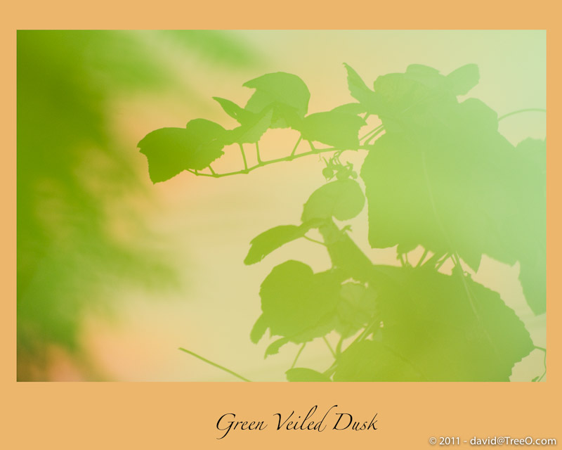 Green Veiled Dusk