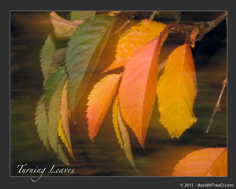 Turning Leaves