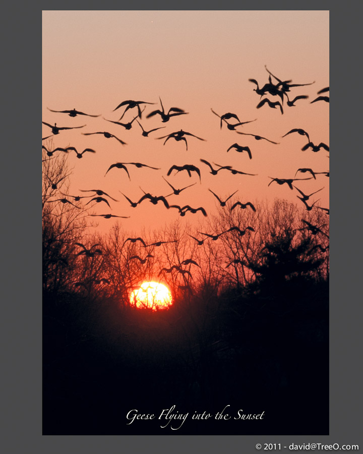 Geese Flying into the Sunset