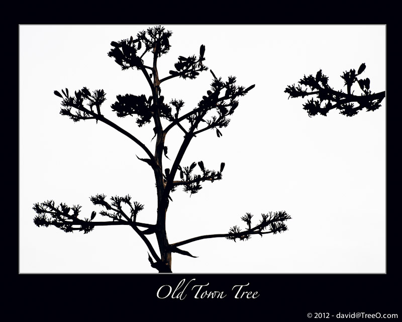 Old Town Tree Silhouette