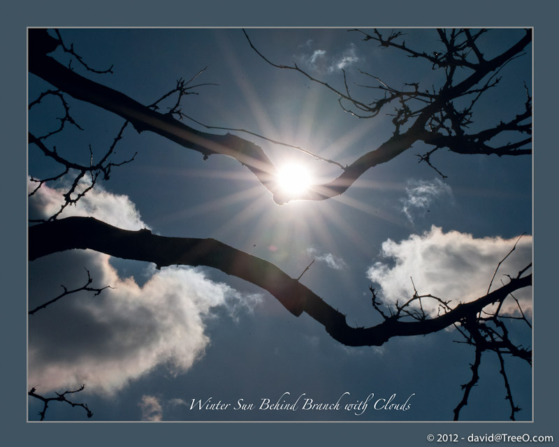 Winter Sun Behind Branch with Clouds