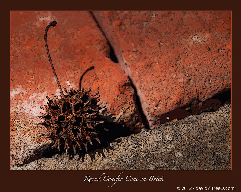 Round Conifer Cone on Brick